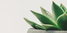 Succulent plant on minimalist white background